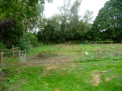 Hen Orchard [BEFORE]